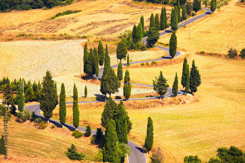 Cypress tree scenic road in Monticchiello near Siena, Tuscany, I - 59525559