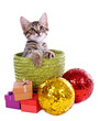 Little kitten with Christmas decorations isolated on white