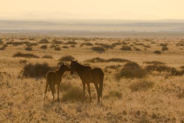 Wild Desert Horses of Garub, Namibia