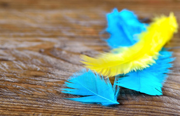 Feathers on rustic wood background.Your text here.