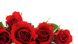 canvas print picture - red roses