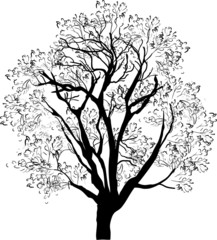 tree black sketch isolated on white
