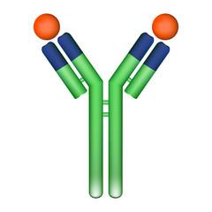 Antibody molecule with antigen