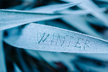 Winter written on frozen