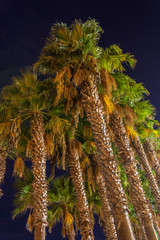 Palms in the night
