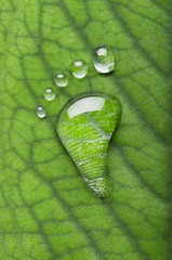 Carbon footprints on leaf