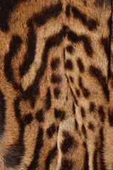 lynx fur pattern