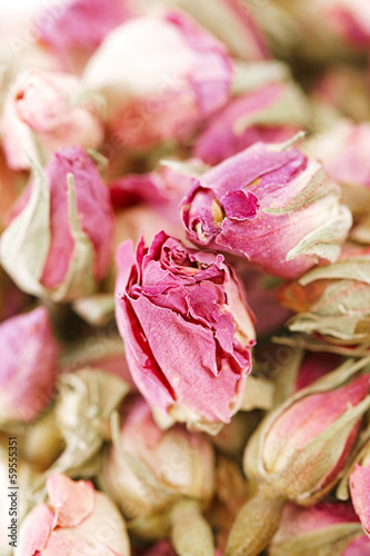 tea rose flowers  background, shallow dof