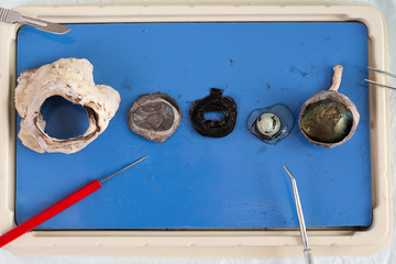 Dissecting a sheep eye