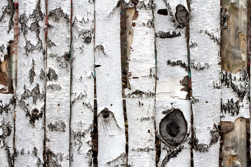 birch wood fence texture