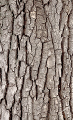 Rough wood tree bark texture background