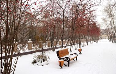winter landscape, spruce, rowan