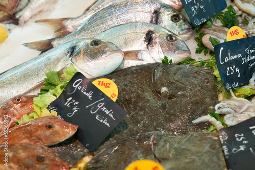 Fresh mediterranean fish on market in France