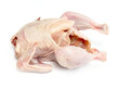 Bird chicken meat on a white background