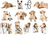 Veterinary set - 59566946