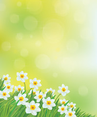 Vector daffodil flowers background.