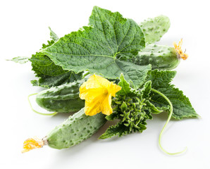 Cucumbers with leaves and flowers