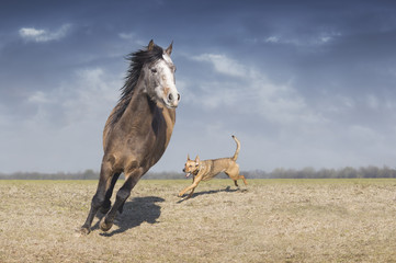 Horse playing with dog in field