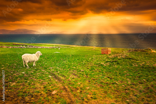 Sheep on coast under idyllic sunset
