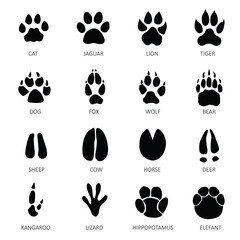 animals with tracks