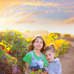 sister kid girs farmer in vineyard harvest in mediterranean autu