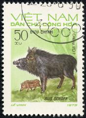 stamp printed in Vietnam shows Sus scrofa or wild boar