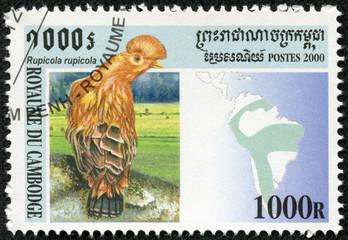 stamp printed Cambodia shows bird(rupicola)