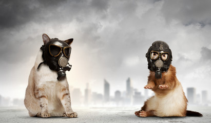 Cat and ferret in gas masks