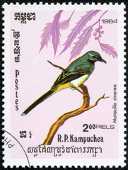 stamp printed by Cambodia, shows bird