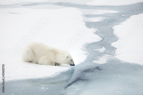 Foto op Plexiglas Antarctica 2 Polar bear waiting for seals