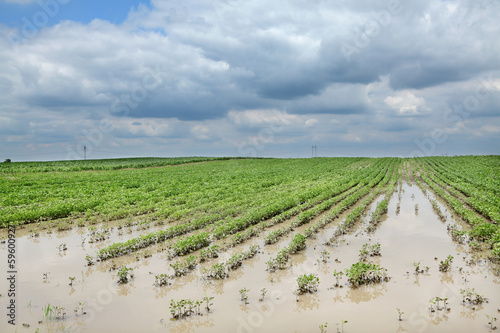 Leinwandbild Motiv Agriculture, flooded soy field in spring, natural disaster