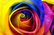 obraz - Rainbow rose or ha...
