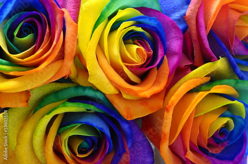 Deurstickers Roses Rainbow rose or happy flower