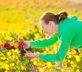 Farmer woman in vineyard harvest autumn in mediterranean