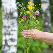 Beautiful bouquet of wild flowers in female hands