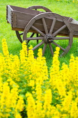 Old wooden cart on the field with green grass and yellow flowers