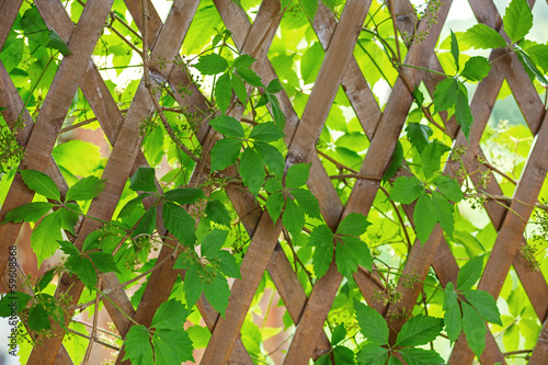 Wooden fence with interlacing branches and leaves