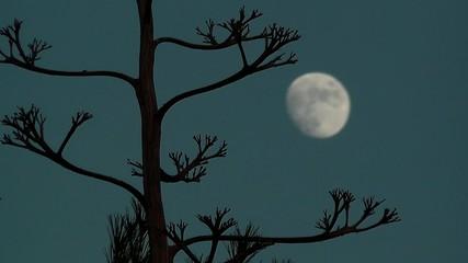 luna desenfocada entre ramas de una pitera