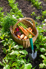 Basket with carrot