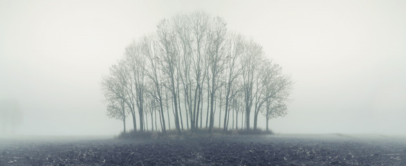 Small forest in autumn foggy day
