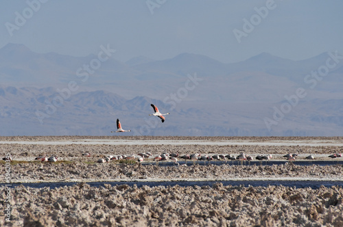 Salt flat of Atacama (Chile)