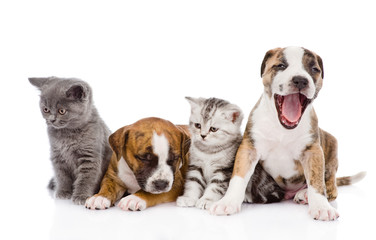 Group of cats and dogs sitting in front. isolated on white