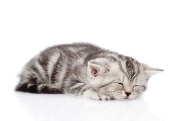 Scottish kitten sleeping. isolated on white background