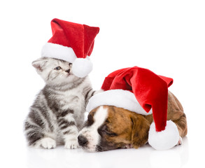 Scottish kitten and small puppy with santa hat. isolated