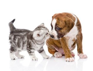 kitten sniffing puppy. isolated on white background