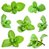 Collection of Fresh mint isolated on white