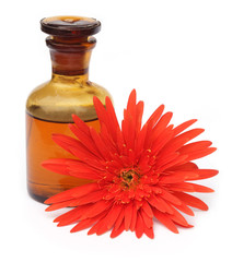 Gerbera with bottle of essential oil