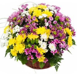Natural colorful asters in a basket