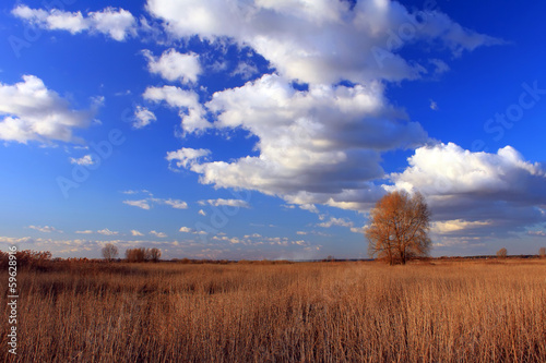 Blue sky with clouds above a lone tree in a field