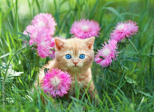 Zdjęcia na płótnie, fototapety na wymiar, obrazy na ścianę : Cute little kitten sitting in rose flower meadow
